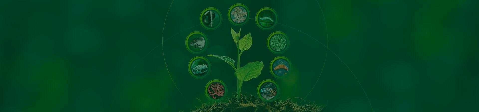 Entendendo os bioprodutos (parte 02)